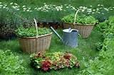 decorative garden planting ideas