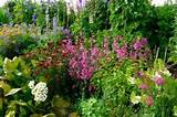 English Cottage Garden Plants - informed is forearmed