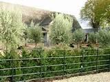 garden landscaping ideas planting schemes