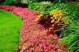 landscape plant materials