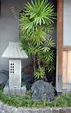 japanese garden planting ideas