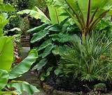 Tropical Garden Design 10, Awesome of tropical garden design ideas