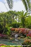 Tropical Garden Pond Planting Ideas