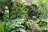 tropical garden designs » landscaping photos