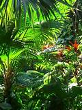 tropical garden landscapes