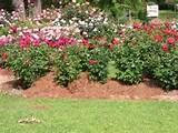 Rose Garden Ideas, Rose Garden Landscaping.
