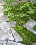 moss garden | DIY Small Garden Landscape Design
