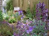 small courtyard garden in london designed and just planted by jenny