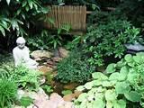 plant a japanese garden