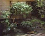 japanese garden plants small japanese garden plants design ideas