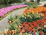 PZ C 7: flower garden