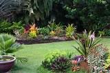 free tropical garden plans