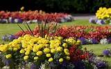 annual flower beds designs that work university of maine