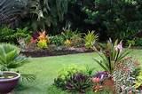 tropical garden gardening tips garden guides