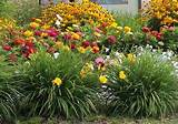 drought resistant plants for your landscaping project landscape