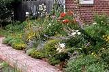 easy natural garden