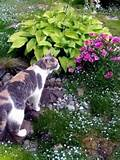 even my animals appreciate the garden as new flowers bloom they take
