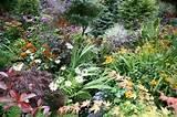 Beautiful Bulbs & Perennials! | Flower Bulb Crazy