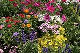 choosing and planting perennials perennial flowers garden ideas