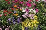 Choosing and Planting Perennials Perennial Flowers – Garden Ideas ...