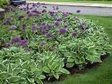 desiging a perennial flower bed