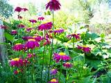 dividing perennials how to make the most of your flowers landscape