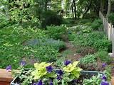 flower garden gardening landscape design