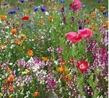 Garden Design Ideas on Journal Garden Design Perennial Flower ...