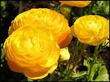 Perennial Flower Garden Ideas | Garden Guides