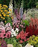 thriving perennial garden