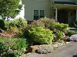 urban eden horiculture perennial flower gardens