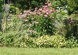 Views from the Garden: Design a perennial flower bed for blooms ...