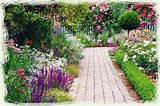 flowers garden summer home perennials annuals