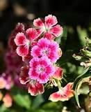 hairstyles Supermarket - Garden Ideas Perennial Flower Garden Ideas