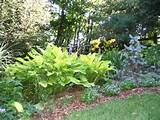 of perennials are highlighted in this extensive garden plants are