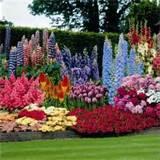 ... the Beautiful Perennial Flowers in Your Frontyard or Backyard Gardens