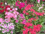 File:Flower garden unknown plant 2.jpg - Wikimedia Commons