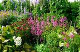 Flower Garden Design Ideas | DexKnows.com