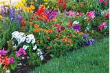 ... flower garden. One of my personal favorites is a design called the