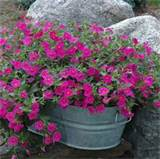 container gardening ideas galvanized steel wash tub