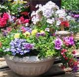 container gardening ideas and garden containers