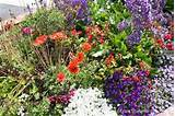 garden delights flower beds planting ideas