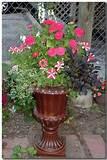 design herb garden design free garden design rock garden design