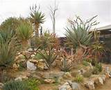 Rock Garden Design Ideas Small Rock Garden Design Ideas – Home Trend ...