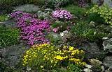 beautiful rock garden plants design ideas home design gallery