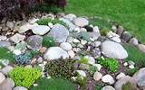 starting a rock garden my garden ideas