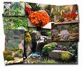 impressive rock gardens an introduction gardening made easy