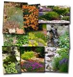 plants for rock gardens gardening made easy