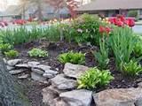 Rock Garden in Spring