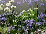 flower garden design ideas from the 2012 rhs chelsea flower show